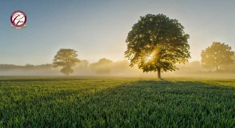 A field next to Hoar cross hall Staffordshire Photographed by Charles Thorne Photography